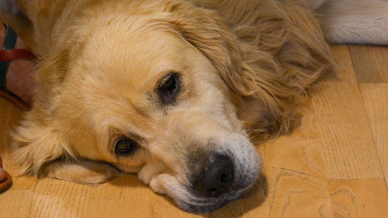 Hundebesuch in der Tagesbetreuung